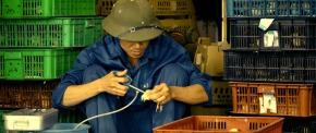 Improving lives and livelihoods through improved livestockhealth