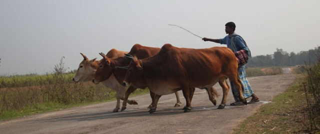 6. pastoralism
