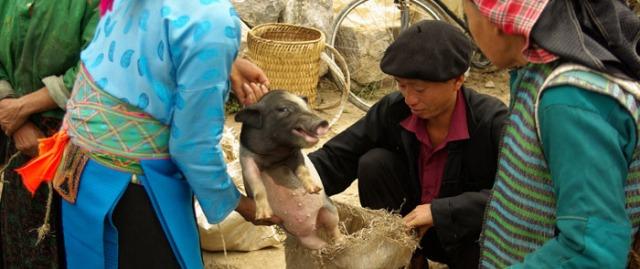 7. animalbreeding