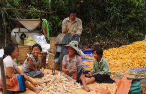 Exploring ways of uplifting pig farmers' livelihoods in northwest Vietnam