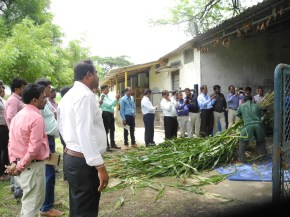 Feed-based intensification training to improve dairy animal performance in Karnataka