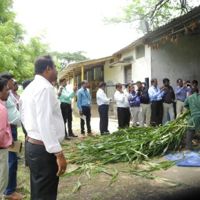 Feed-based intensification training to improve dairy animal performance inKarnataka