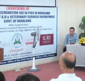 Artificial insemination for swine launched in Nagaland, India