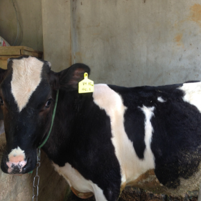 First empirical database of greenhouse gases emissions from the livestock sector inVietnam