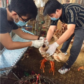 Bioaerosol sampling to detect avian influenza virus in Hanoi's largest live poultry market