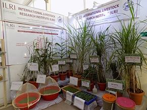 ILRI showcases feed and fodder technologies at 'Krushi Odisha 2019' agricultural fair