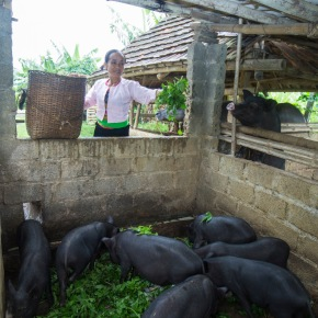 Regional experts join forces to improve smallholder pig sector in Asia and the Pacific