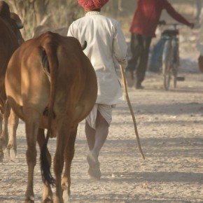 Engaging non-scientists in the scientific process: India project employs 'participatory system dynamics modelling' to improve control of livestock diseases in the country