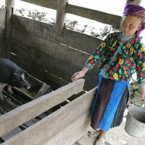 New livestock project in Vietnam can help improve livelihoods of ethnic minorities
