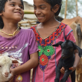Training on the economics of animal health to improve management of disease threats in India