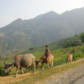 Engaging key stakeholders towards a CGIAR sustainable animal productivity initiative inVietnam