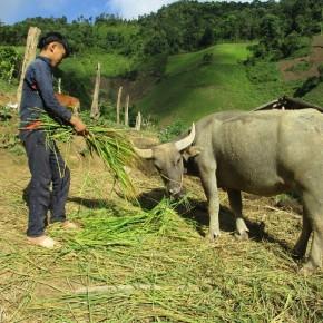 Art competition showcases public view of livestock development inVietnam