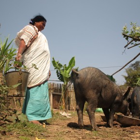 CGIAR One Health initiative to forge a partnership of win-win cooperation inIndia